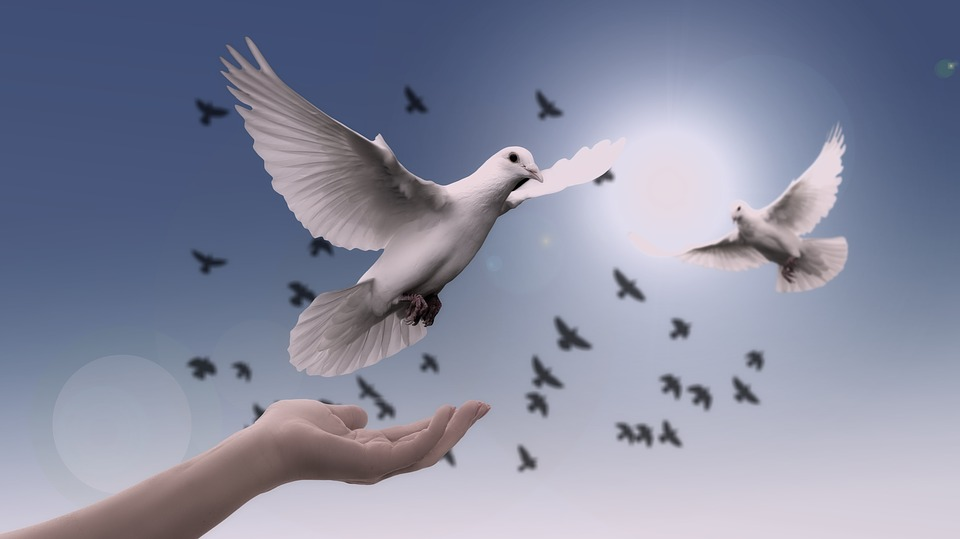 paz, amor, espiritual, espiritual, paloma paz