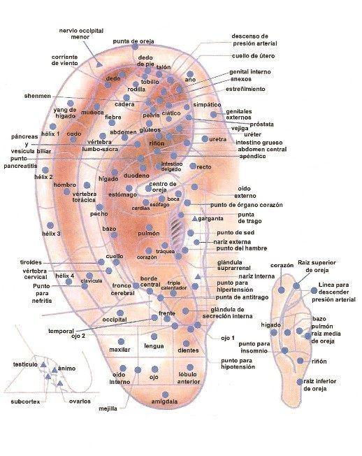 Puntos de acupuntura en oreja